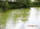 vioeler kuhle1.jpg