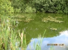 vioeler kuhle5.jpg